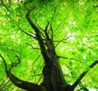 Eco Friendly Tree